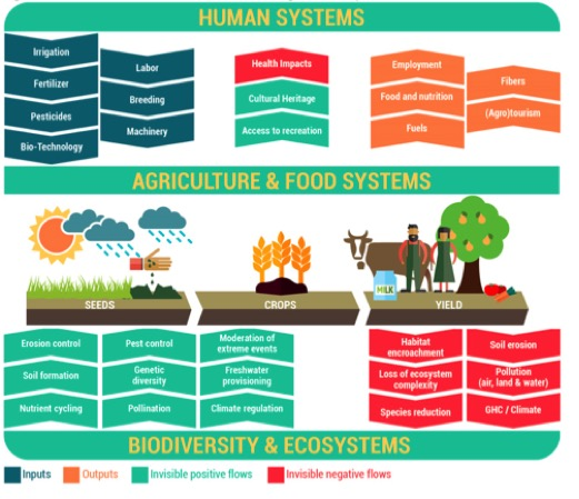 Figure 1 - The eco-agri-food systems complex